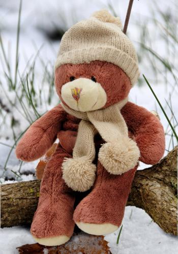 Teddy Bear Stuffed Stuffing